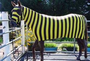 Ironman Training Blog Bumblebee Horse