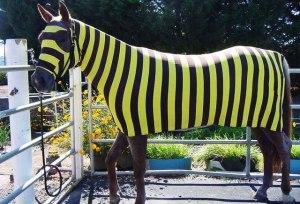 Ironman Training Blog Bumblebee Horse