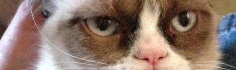 Grumy Cat Ironman Diary